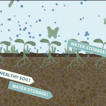 The Soil Story