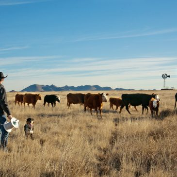 Managing cattle for soil and watershed health