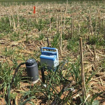 NMSU study finds cover crops can improve soil health
