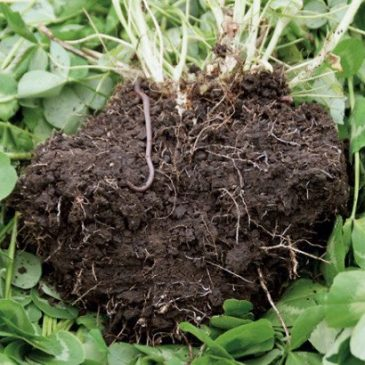 From Dirt to Soil using the Principles of Soil Health