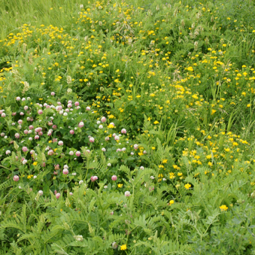 10 Tips for Summer Grazing Success