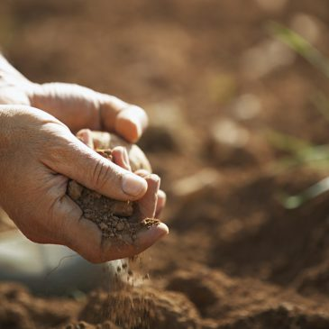 New Mexico welcomes dozens new Soil Health Champions
