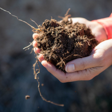 NMSU to host two-day soil health workshop