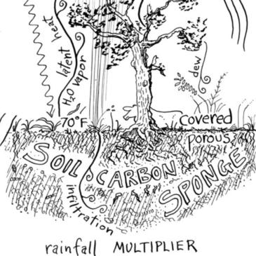 The Water-Harvesting Soil-Carbon Sponge