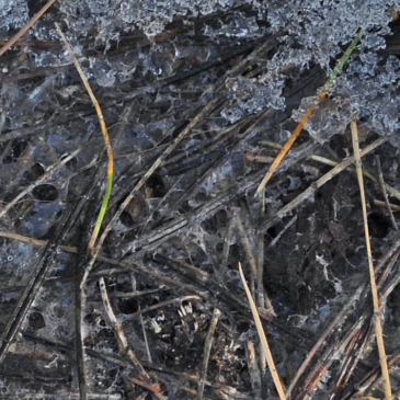 Ruminations on Forest Soil Health