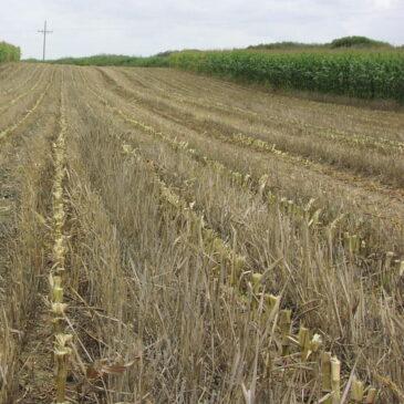 NMDA accepting Healthy Soil Program grant applications