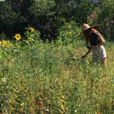Join the New Mexico Cover Crop Seed Collective!