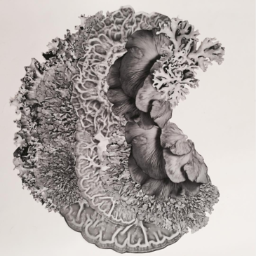 Below the Surface –Art about Soil Ecology